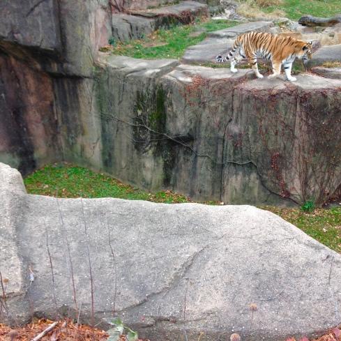 Lincoln Park Zoo©Blogginginitaly.com